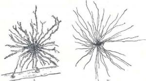 Labobio24 cellules-gliales-300x167