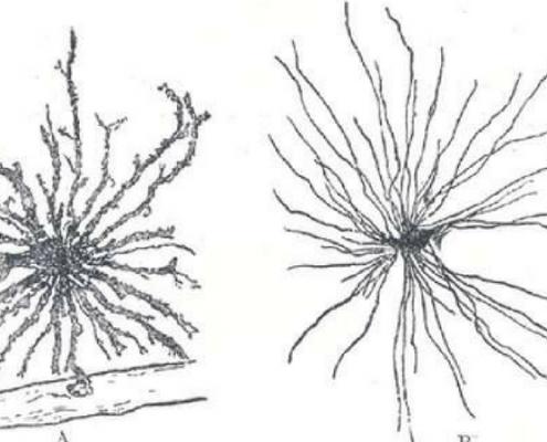 Labobio24 cellules-gliales-495x400