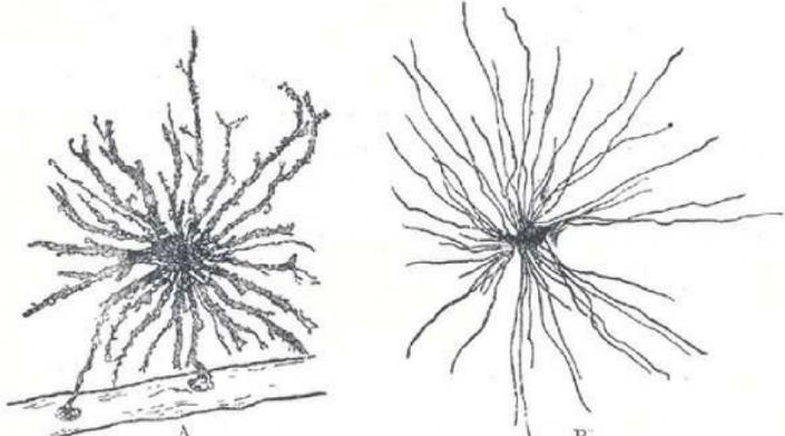 Labobio24 cellules-gliales-705x392