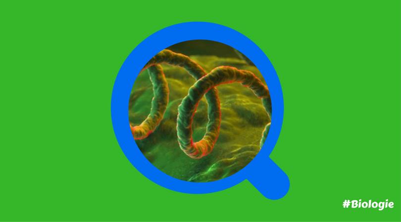 Syphilis : comprendre les symptômes de l'infection ?