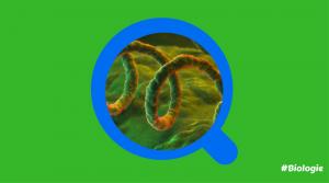 Labobio24 syphilis-300x167